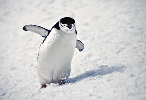 penguin21n-1-web.jpg